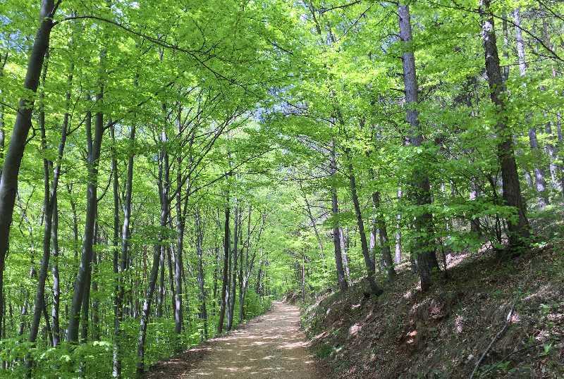 Tuerkensturz Türkensturz Wald Wandern Natur
