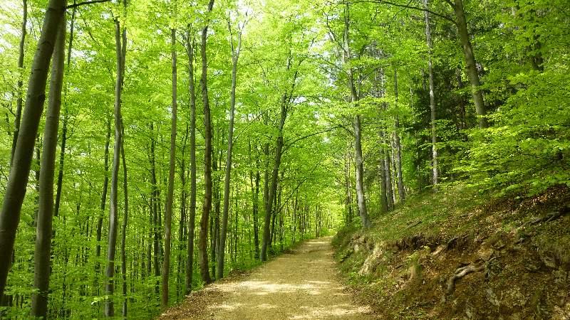 Türkensturz Wald Wandern