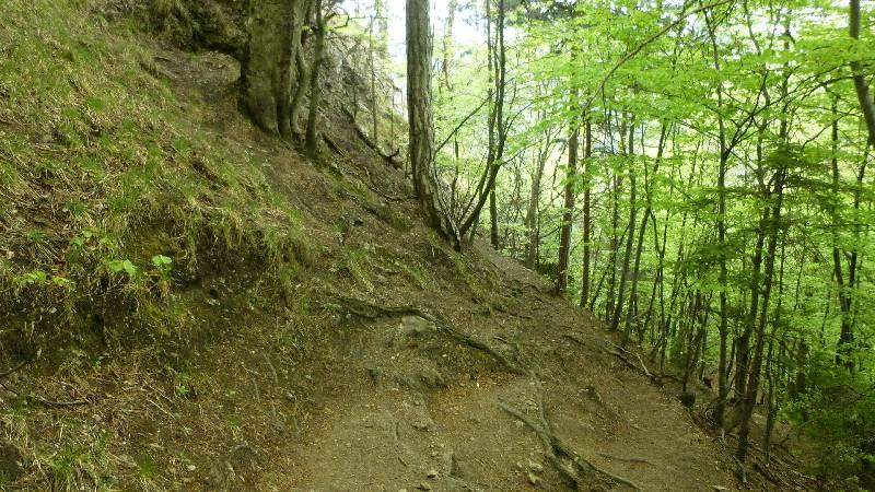 Einsiedlerinhöhle Hoehle Höhle Tuerkensturz Türkensturz Wald Natur Ausflug