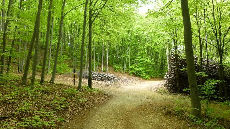 Waldweg Türkensturz