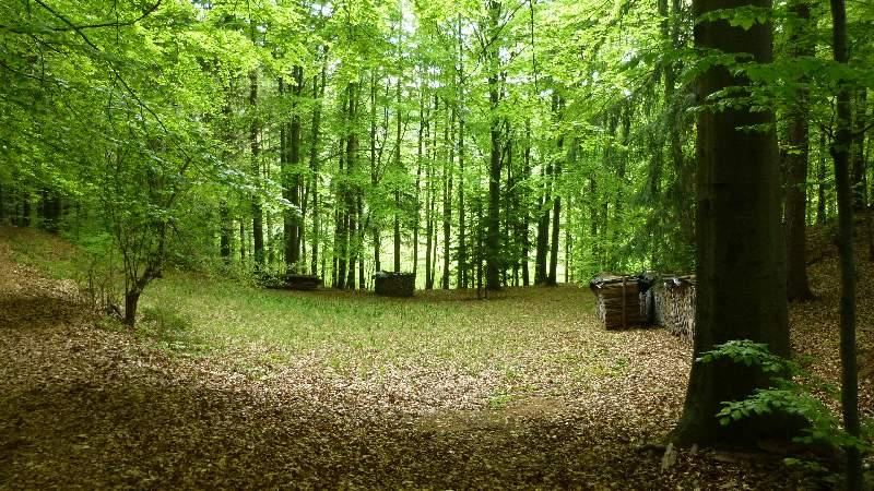 Tuerkensturz Türkensturz Aussicht Wandern Natur Wald Ausflug Lichtung Waldlichtung